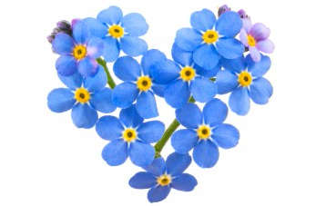 forget-me-not.jpg